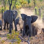 elephants-01