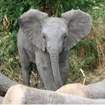 elephants-04